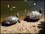 Arizona 2011 - Turtles by DarlingMionette