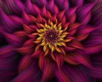 Spiral Flower 9 by johnnybg