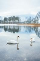 swan lake by photoplace