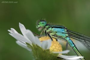 157.Dragonfly by Bullter