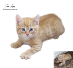 Ginger kitten by TinaLouiseUk