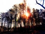 Sun Light Through the trees. by Smoking-Rooftops