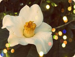 Like a wild flower. by x--photographygirl