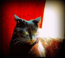 Sun Ray On My Kitty by surrealistic-gloom