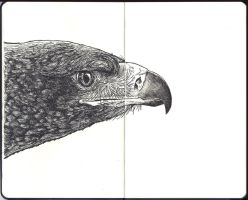 Sketchbook - s a eagle innit by keiross