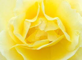 Open Flower by tpphotography
