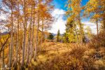 On Top With Aspens by mjohanson