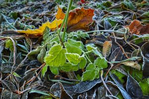 Between Autumn and Winter... _6_ by my-shots
