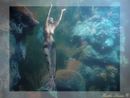 Under the Sea by Senerity