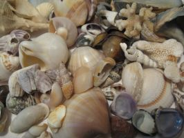 Shells III by GeshemStock