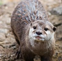 Otter otter everywhere by Roland3791