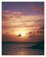 Seagull Over St. Ives by she-sins