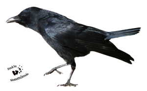 Cut-out stock PNG 124 - stealth crow by Momotte2stocks