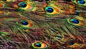 abstract peacock by Yair-Leibovich