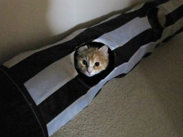 Tunnel Cat by man-in-shack