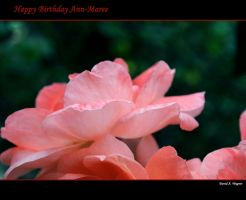 Happy Birthday Ann-Maree by David-A-Wagner