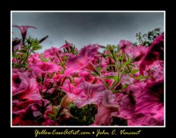 Mt. Flower HDR by yellowcaseartist