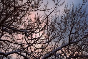 sky and branches by Kitty-Kitty-Kit-Kat