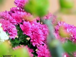 plant life 10 by drummerkidd12