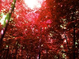 red forest by karpit