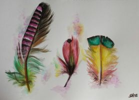 Colorful feathers by SandraHermans