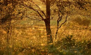 Barnagaw Golden hour IV by younghappy