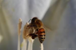 Busy Bee by Phenix59