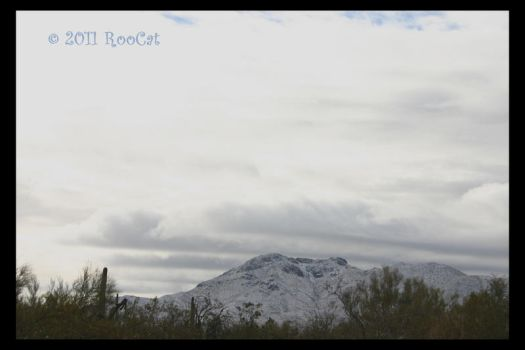 Snowy Wasson Peak Tucson Mts. by RooCat