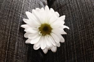 Denim white daisy by Shanibelle