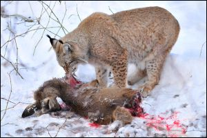 Best friends by Svenimal