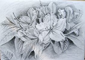 Flowers - pencil drawing by gosia-jasklowska