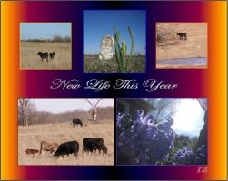 New Life This Year by Taures-15