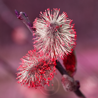 Reds by eyedesign