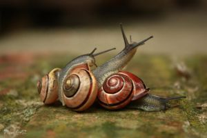 Snails by YulienDeath