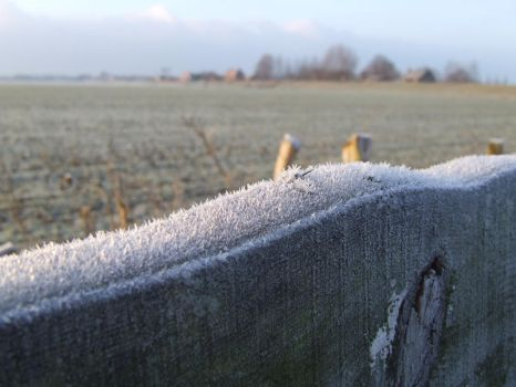 Icy fence II by nikivanderende