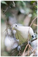 White Pidgeon 2 by droolz