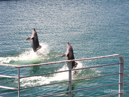 Dancing Dolphins. by monsterseverywhere
