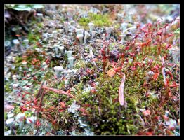 Moss-Eye View Part 2 by LifeIsToBeHappy