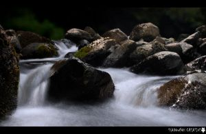 Water of Leith 8 by shadowfoxcreative