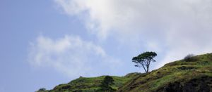 Lonely tree by forgottenson1
