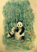 Panda in bambooforest COLOUR by Thanisan
