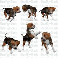 Beagle Puppies Stock Pack 4 by Shoofly-Stock