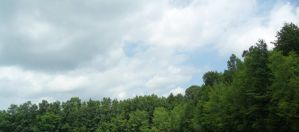 Stock Photo 3 Sky and Trees by Paco-Taco14