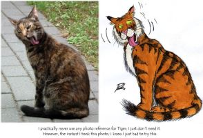 Indy (my cat) and Tiger Comparison by PaulEberhardt