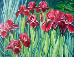 Maroon Irises by TernFeather