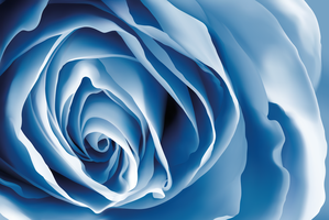 Blue rose by Armonah