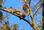 Squirrel by StephenFisher