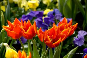 Spring Flowers by photoman356