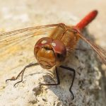 Eyes of a dragonfly by starykocur