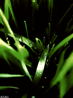 Water Droplets - MonoGreen by OneofakindKnight